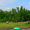 1-North to Alaska-Onoway, Alberta, may 27 2015, 205pm DSCN9811